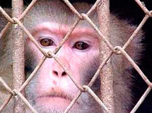 Fabula de los Monos