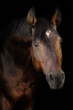 fabula del caballo